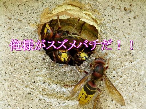 lol-スズメバチ