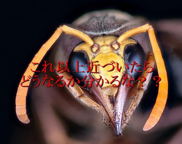 lol-スズメバチ-警告