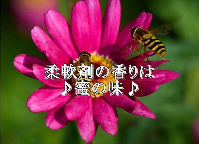 lol-スズメバチ-柔軟剤に釣られる